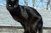"""Behandeln Ihre Katze mit Imidcloprid floh Medikation wie """"Vorteil"""""""
