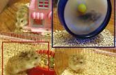 Hamster in der Mongolei
