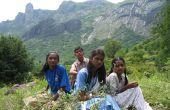 Der Natur: Auf der Suche nach Heilpflanzen