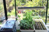 Urban Farming: Indoor Starter Pflanzen aus Samen