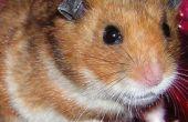 Fangen An entgangen Hamster mit Überschuss Elektronik