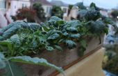 Einfache elegante Pflanzerkasten aus Altholz