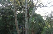 Wie man ein Seil in einen Baum (ohne Klettern es)