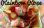 Regenbogen Rose