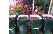 Hybrid Aquaponic / Erde indoor Wintergarten