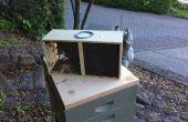 Ein Paket von Bienen Hiving