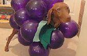 Machen Sie Ihren Hund in A Bündel von Trauben für Halloween