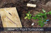 Tomatenpflanzen - Pflanzen binden und wachsenden Führer