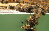 Honig Ernte und Extraktion