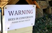 Einheimische Biene Bienenstock