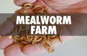 Mehlwurm Farm