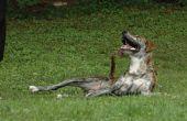 DIY häkeln Hundegeschirr