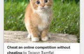 Gewusst wie: suchen Sie nach einem kleinen Kätzchen