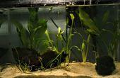 Aquascaping: die Kunst des Unterwasser-Garten