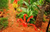 Das Leben des Ruhms Lilie Blume: A Natur Watcher Tagebuch