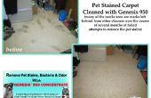 Haustier Flecken & Gerüche aus Teppich entfernen