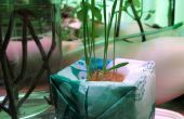 Plastic Bomb: Hydrokultur aus Plastiktüten