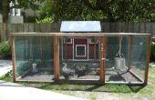 Urban Farming: Hinterhof Hühner