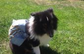 Hund Wandern Rucksack