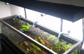 DIY-High-End gepflanzt Tank #Balleronabudget