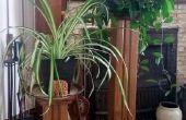 Von hymnischen Racks steht - eine Übung in der Umnutzung architektonische Holz Erkenntnisse zu Pflanzen