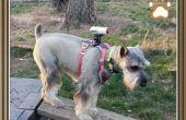Doggie Cam Mount