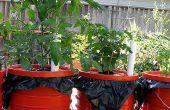 Dearthbox: Eine kostengünstige, selbst bewässernde Pflanzer