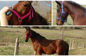 Wie Sie Ihr Pferd pflegen
