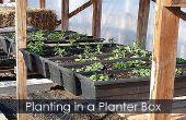 Blumenkasten-Pflanzung - wie man pflanzt eine Pflanzerkasten