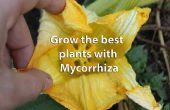 Dünger, Hosentasche, die Welt zu retten und gesündere Pflanzen mithilfe von Mykorrhiza abrufen