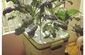 DIY Aeroponics 6-Pflanze Wanne mit eingebauten Behälter