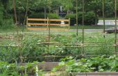 Bambus-Tomaten-Spalier