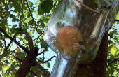 Wie man einen Apfel In der Flasche wachsen