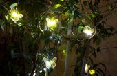 6 Tipps wie Sie Solarlandschaftsbeleuchtung zu wählen.
