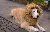 Löwe Hund Kostüm