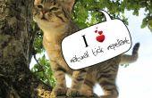 Natürliche Repellent Tick für Katzen