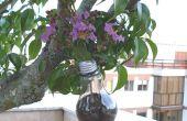 Topf Blüte mit Lampe