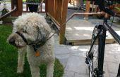 Eine kostengünstige und sichere Fahrrad-Doggy Walker