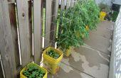 Selbst bewässernde Container Garten