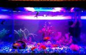 Aquarium LED Beleuchtung || High-Intensity || Fisch-Farbe zu verbessern