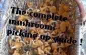 Führen Sie die kompletten Pilze aufnehmen
