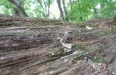 Erstellen Sie eine USB Dead Drop in der Natur