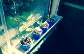 Fenster-Hydrokultur