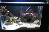 Gewusst wie: einrichten und bauen eine selbst enthaltenen Salzwasseraquarium mit eingebauten Zuflucht