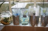 Hydroponic Kopfsalat Garten aus Plastikflaschen (Grow Flaschen)