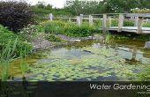 Garten Teiche Netzwerk In Ihrem Hinterhof - DIY Idee