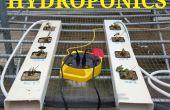 Einfache Hydrokultur Erdbeeren