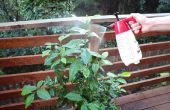 Bio-Pestizid und Fungizid sprühen