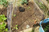 Gewusst wie: ein Low-Cost-Gemüsegarten Spalier bauen