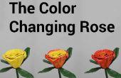 Der Farbwechsel Rose